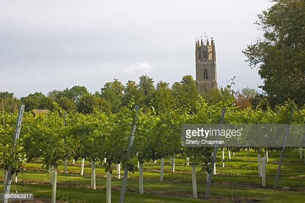 vineyard in northamptonshire, england. - northamptonshire - fotografias e filmes do acervo