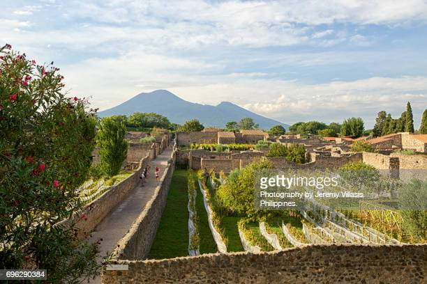 vineyard in pompeii - campania stock pictures, royalty-free photos & images
