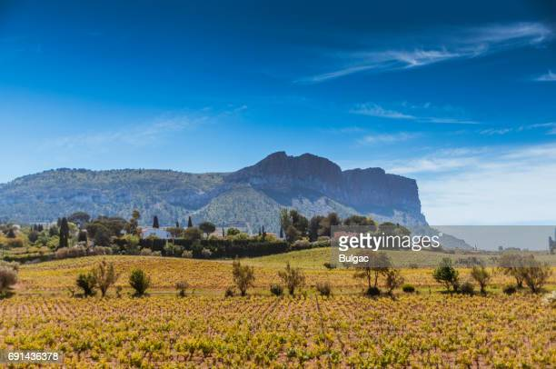 vineyard in provence - cassis stock pictures, royalty-free photos & images