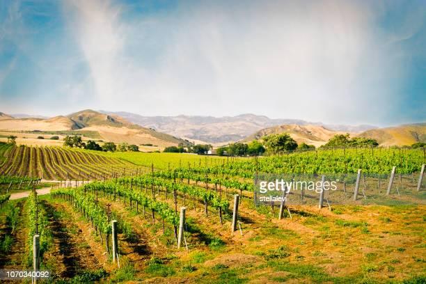 viñedo en santa ynez california - valle fotografías e imágenes de stock