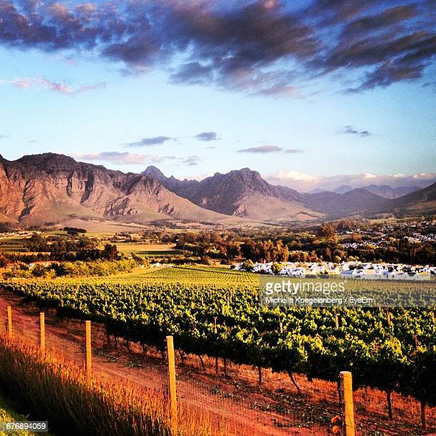 Vineyard In Stellenbosch Against Sky