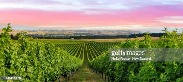 vineyard in the awatere valley - marlborough new zealand stock pictures, royalty-free photos & images