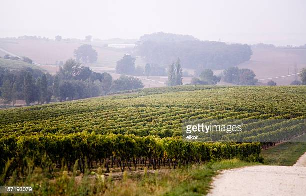 vineyard in the morning - midi pyrénées stock photos and pictures
