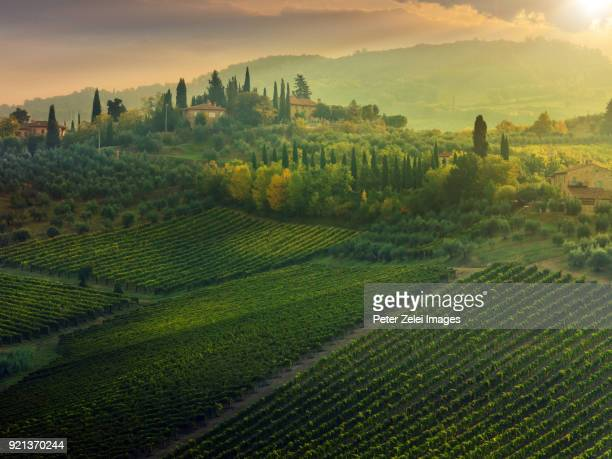 vineyard in tuscany at sunset - siena italy stock photos and pictures