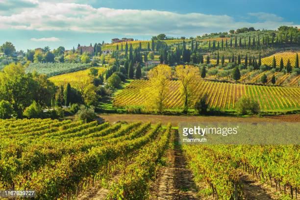 vigneto in toscana, italia - terra coltivata foto e immagini stock