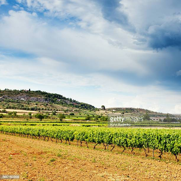 CONTENT] Vineyard in Vilafranca del Penedès best known for making famous Cava sparkling wine