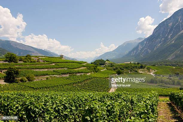 vineyard in wallis, switzerland - rhone stock pictures, royalty-free photos & images