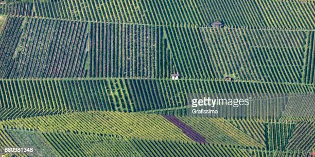 Vineyard in Weinsberg near Heilbronn Germany