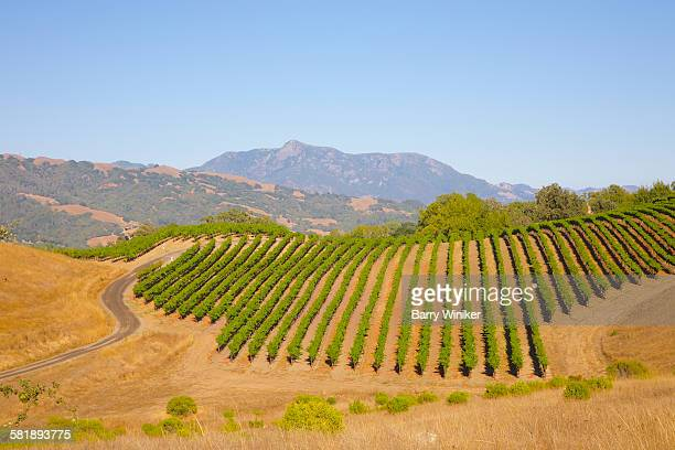 Vineyard, Jordan Winery, Sonoma Co., California