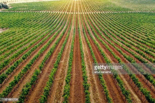 vineyard landscape from above - agricultura fotografías e imágenes de stock