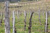 http://www.istockphoto.com/photo/vineyard-landscape-in-slovenia-gm666135016-121398797