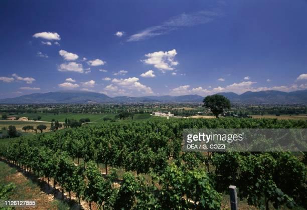 Vineyard landscape near Montefalco, Umbria, Italy.