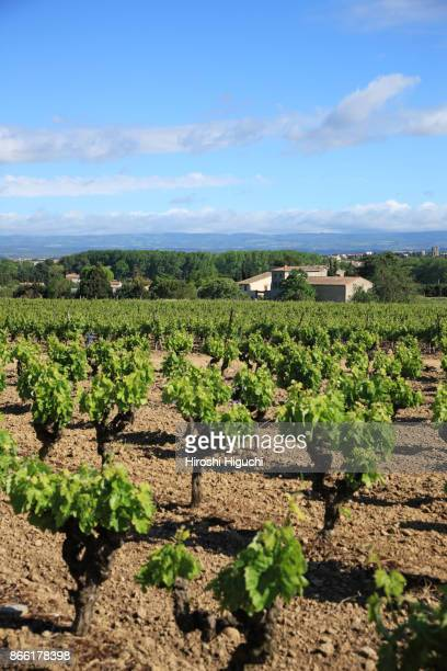 vineyard, landscape of languedoc-roussillon, france - languedoc rousillon stock pictures, royalty-free photos & images