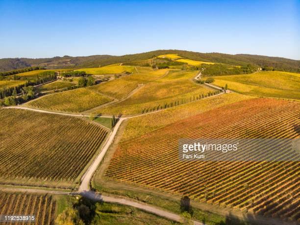 vineyard landscape - terra coltivata foto e immagini stock