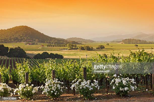 vineyard landscape - napa valley stock pictures, royalty-free photos & images
