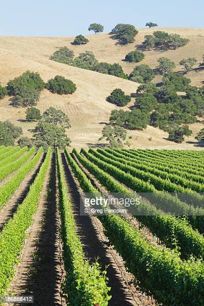 vineyard landscape - los olivos california stock pictures, royalty-free photos & images
