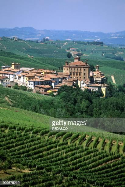 Vineyard Langhe Piemonte Italy