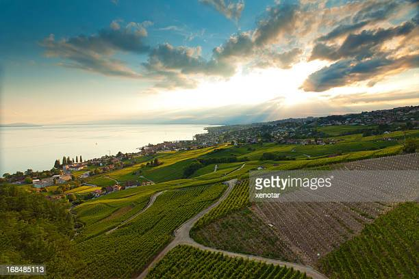 vineyard near lac leman under golden sunshine - vaud canton stock photos and pictures