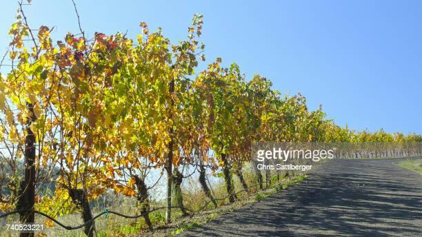 Vineyard near road