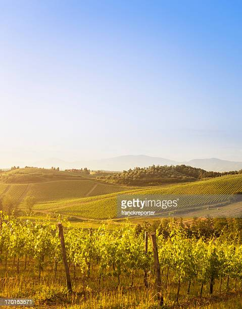 vineyard on chianti region hills - italy - sonoma county stock pictures, royalty-free photos & images