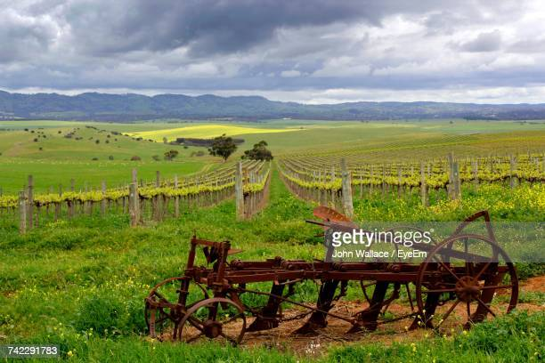 Vineyard On Field Against Cloudy Sky