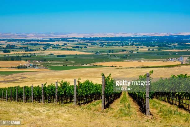 vineyard on hillside overlooking rural landscape, walla walla, washington, united states - bundesstaat washington stock-fotos und bilder