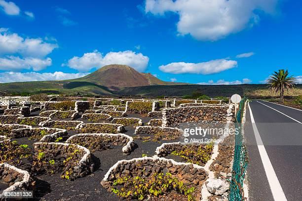 Vineyard on Lanzarote
