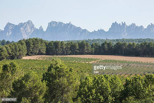 Vineyard over Montserrat Mountains