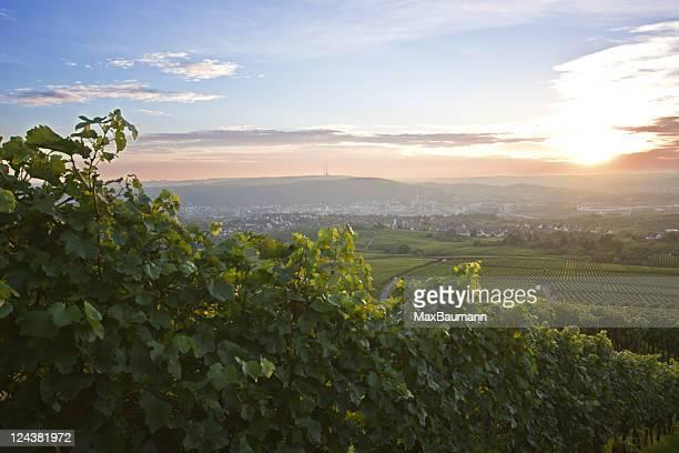 Vineyard over Stuttgart