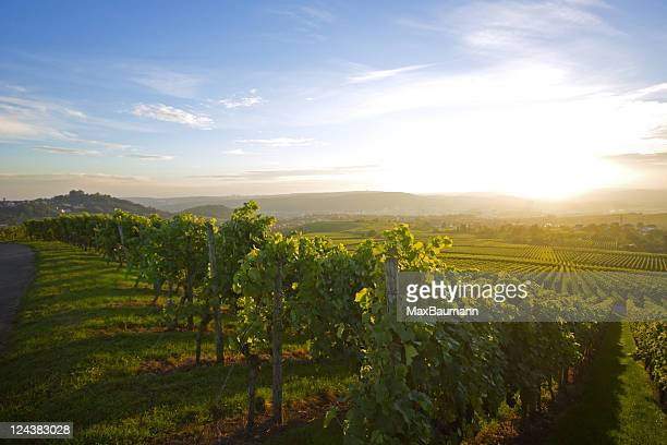 vineyard over stuttgart - hill stock pictures, royalty-free photos & images