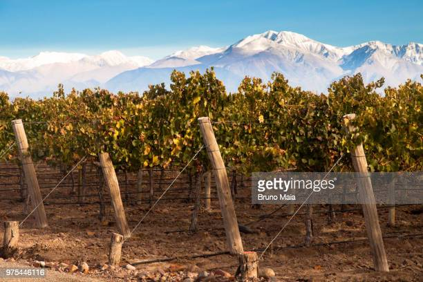 Vineyard overlooking majestic mountain range, Mendoza, Argentina