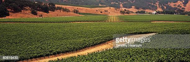 vineyard overview - timothy hearsum imagens e fotografias de stock