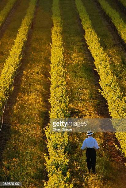 Vineyard owner between rows of vines,Perth Hills,Australia