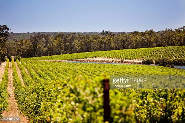 ブドウ園 - ワイナリー ストックフォトと画像