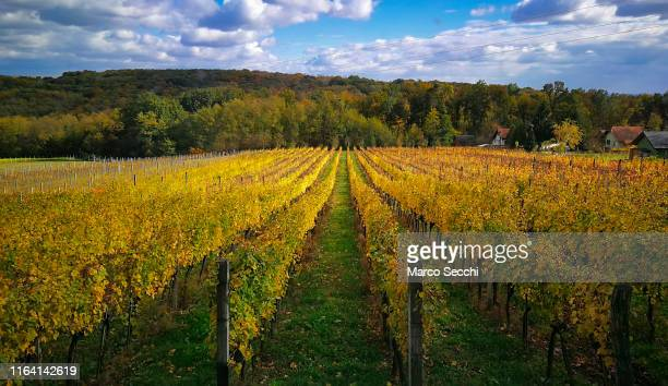 vineyard - marco secchi stock photos and pictures