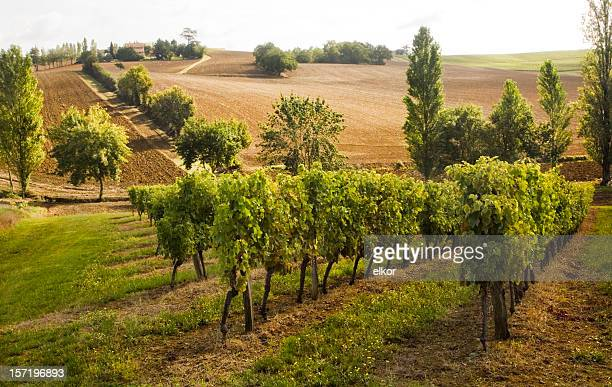 vineyard - pyrénées photos et images de collection