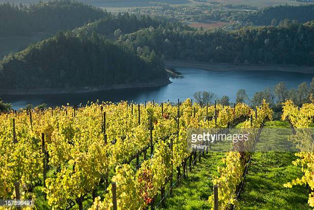 vineyard - napa valley stock pictures, royalty-free photos & images