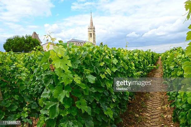 vineyard - bordeaux wine stock photos and pictures