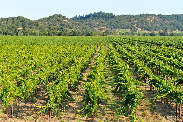Vineyard Wall Art