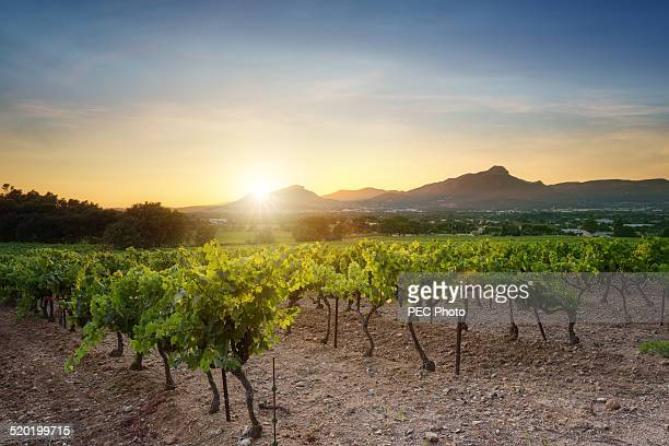 vineyard - provence alpes cote d'azur stock photos and pictures