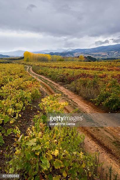 vineyard - provinz leon stock-fotos und bilder