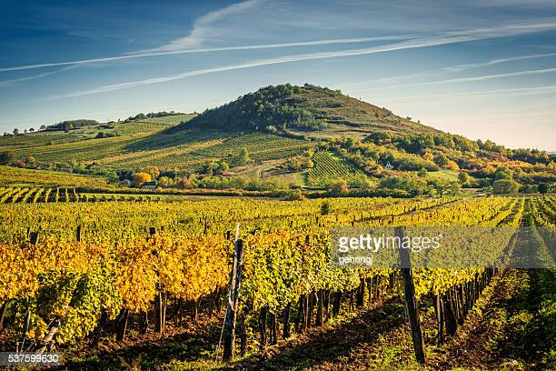 vineyard - hungary stock pictures, royalty-free photos & images