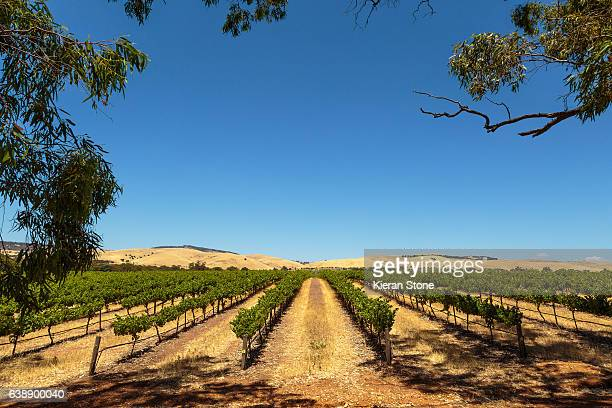vineyard - adelaide stock pictures, royalty-free photos & images