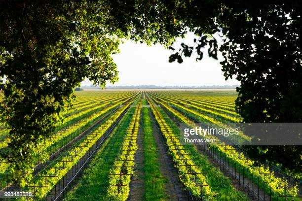 vineyard - winery stock pictures, royalty-free photos & images