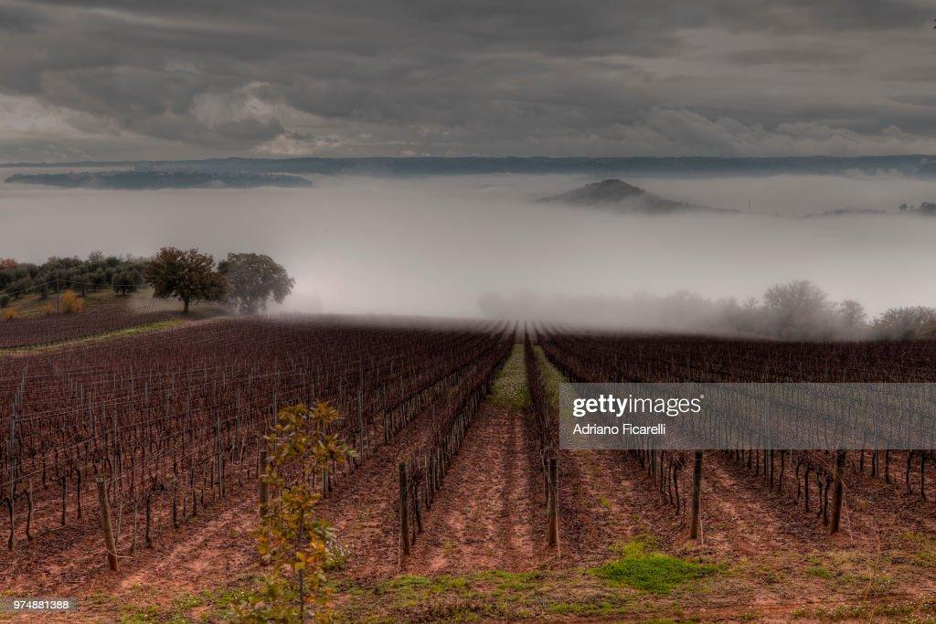 Vineyard shrouded in mist, Orvieto, Umbria, Italy : Foto stock