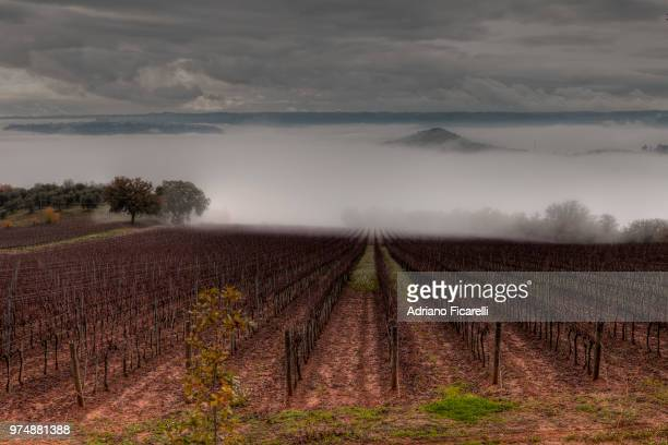 Vineyard shrouded in mist, Orvieto, Umbria, Italy