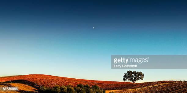 Vineyard Sky Panorama