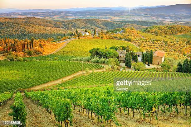 vineyard sunset landscape from tuscany - volterra stock photos and pictures