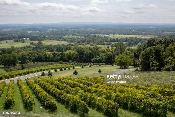 vineyard views at bluemont vineyard in northern virginia. - northern rail stock pictures, royalty-free photos & images
