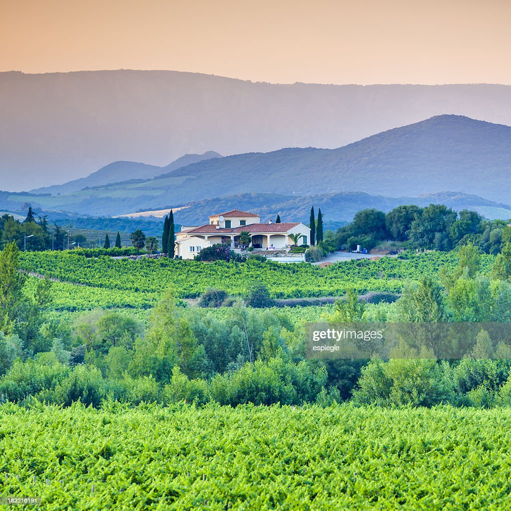 Vineyard, villa and rolling hills in Languedoc-Rousillon : Stock Photo